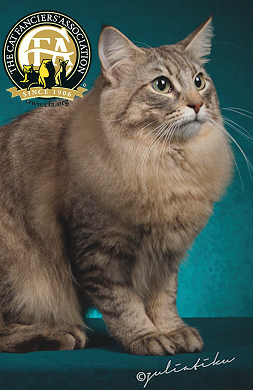 GC LYNX MANUL ODACHI-OF-RAY OF LOVE