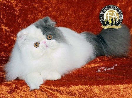 GC, NW FANCYFLUFF'S LUCKY CHARM