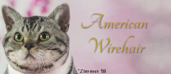 American Wirehair Breed Banner