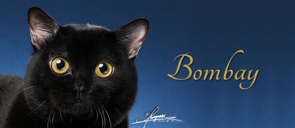 Bombay Breed Banner