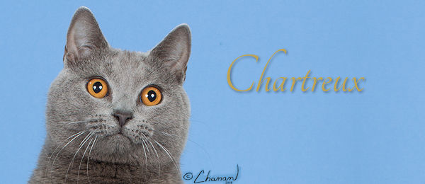 Chartreux Banner