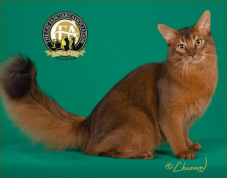 GC, RW CAMELOTTE'S SIR MERLIN OF AMEUSIN