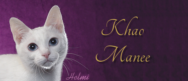 Khao Manee Breed Banner