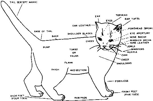 Parts of the Cat