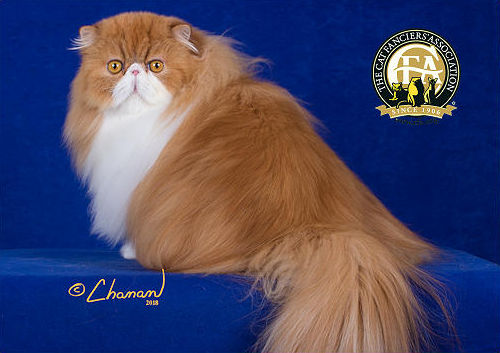 GP, NW CHELCECATS CHARLIE