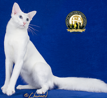 GC, BWR, RW SACCHIDANAND SNOW BLING OF CYNDICAT