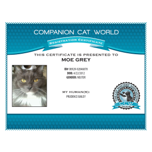 CCW Official Certificate