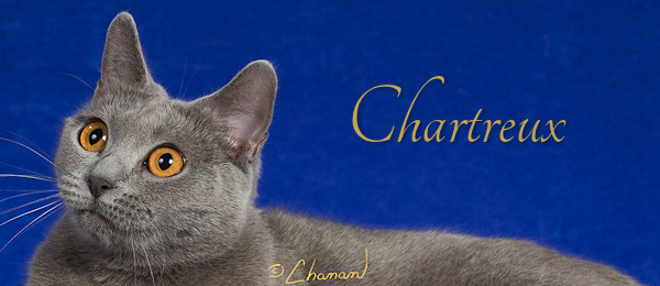 CharBanner2020a Sm